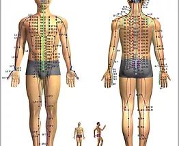 Anatomia de Canais e Colaterais