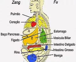 Zang Fu – Orgãos e Viceras (MTC)